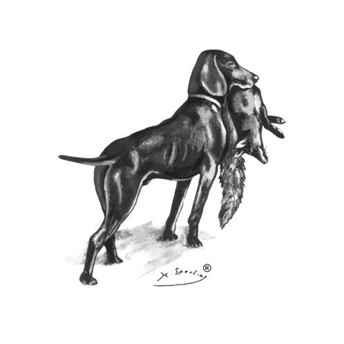 JGHV-Prüfungsfragen-logo